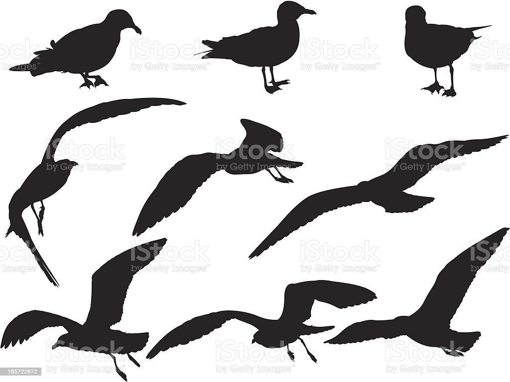 Close-up of seabirds vector art illustration