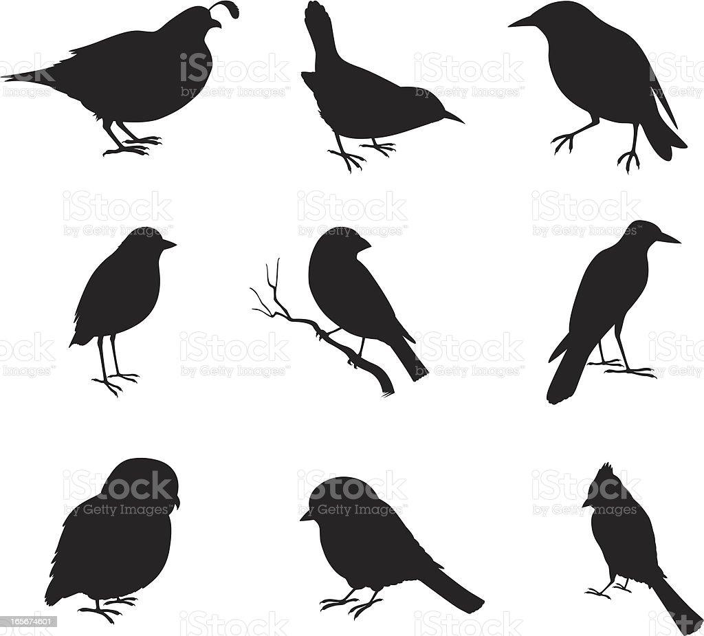 Close-up of various birds vector art illustration