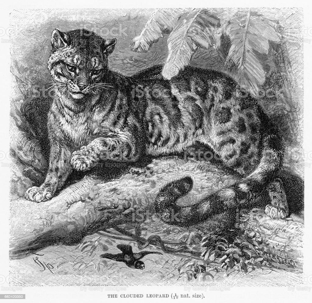 Panthère gravure 1894 panthère gravure 1894 – cliparts vectoriels et plus d'images de antiquités libre de droits