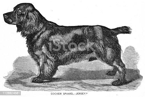 istock Cocker Spaniel Dog engraving 1891 1128824581