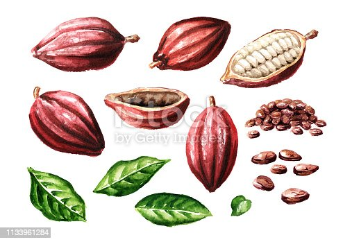 Cocoa pods and beans with leaves set. Superfood . Watercolor hand drawn illustration, isolated on white background