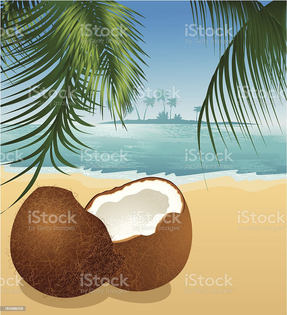 Coconut on the beach under palm tree vector art illustration