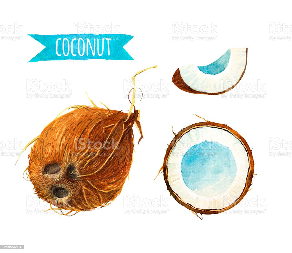 Coconut set, watercolor illustration with clipping path vector art illustration