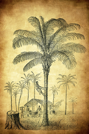 Coconut tree (Cocos nucifera) and Elaeis guineensis (African oil palm, macaw-fat)
