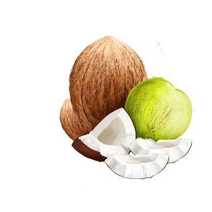 Coconut tree Cocos nucifera isolated on white. Family Arecaceae palm family and only species of genus Cocos. Coconut palm, seed, or fruit, which is drupe not nut. Food and cosmetics. Digital art