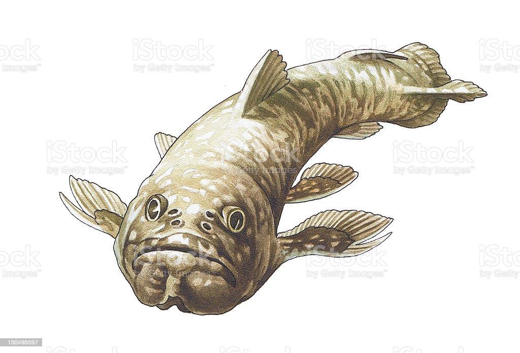 Coelacanth. Latimeria. vector art illustration