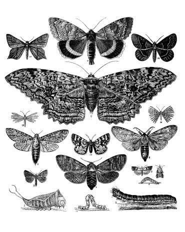 Collection of Butterflies, Moths and Caterpillars
