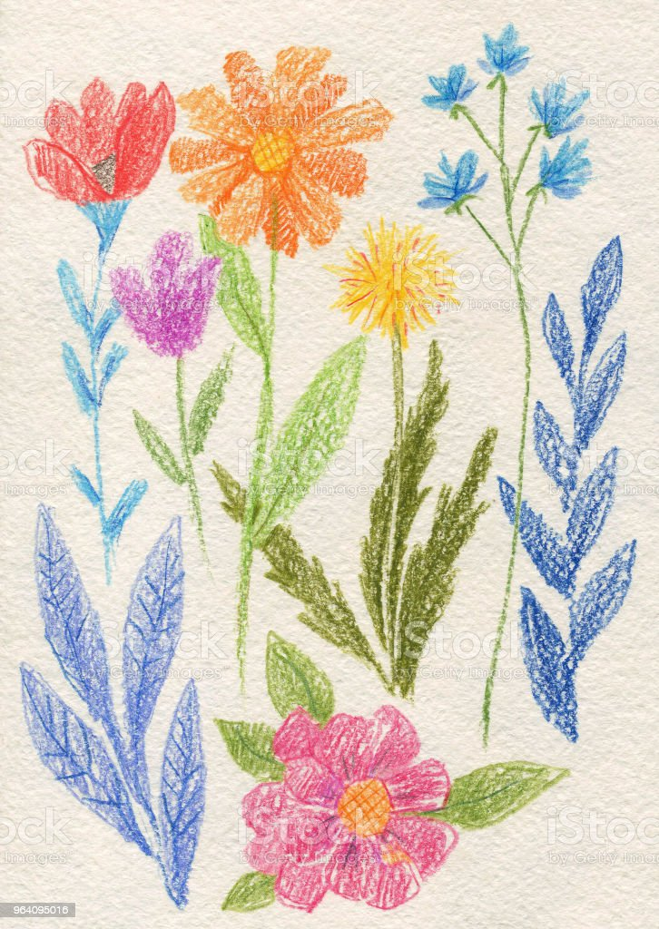 collection of flowers and plants drawn with colored pencils, Botanical set - Royalty-free Abstract stock illustration