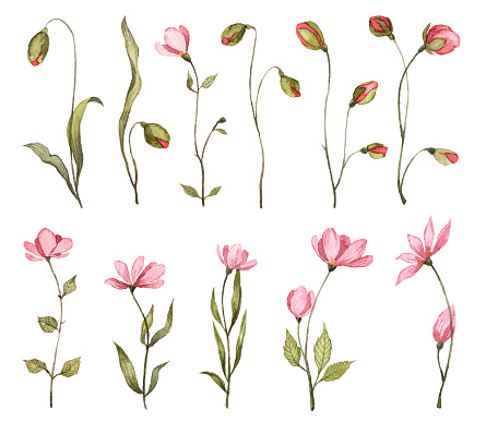 Collection of hand painted watercolor pink flowers. Botanical illustrations