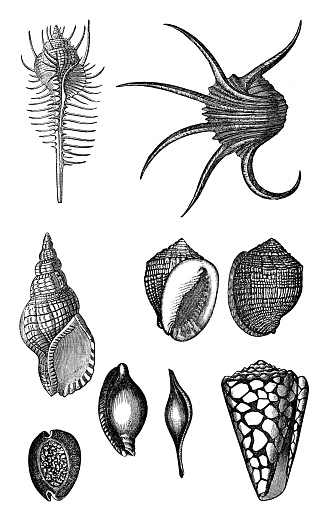 Collection of mollusks