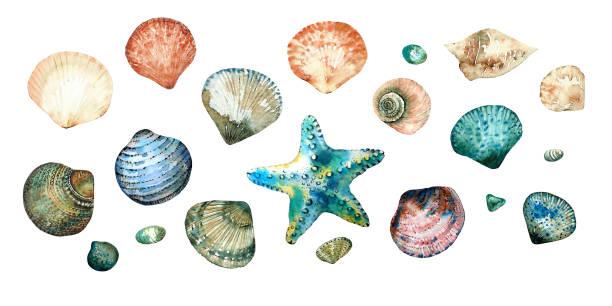 stockillustraties, clipart, cartoons en iconen met collectie van schelpen in stijl doodle en abstract handgeschilderd met aquarellen geïsoleerd op een witte achtergrond. - zeeschelp
