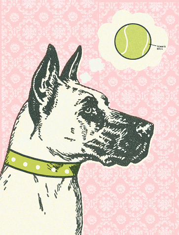 Color Great Dane Profile