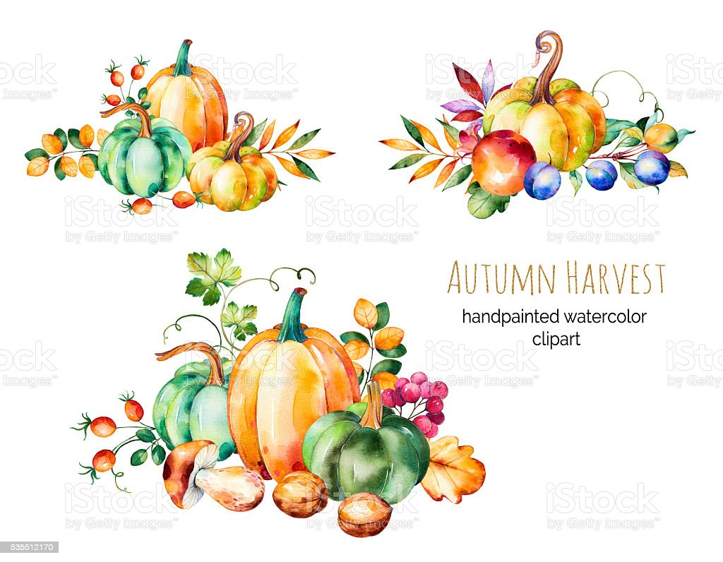 Colorful autumn collection with fall leaves,branches,berry,blackberry,mushrooms vector art illustration