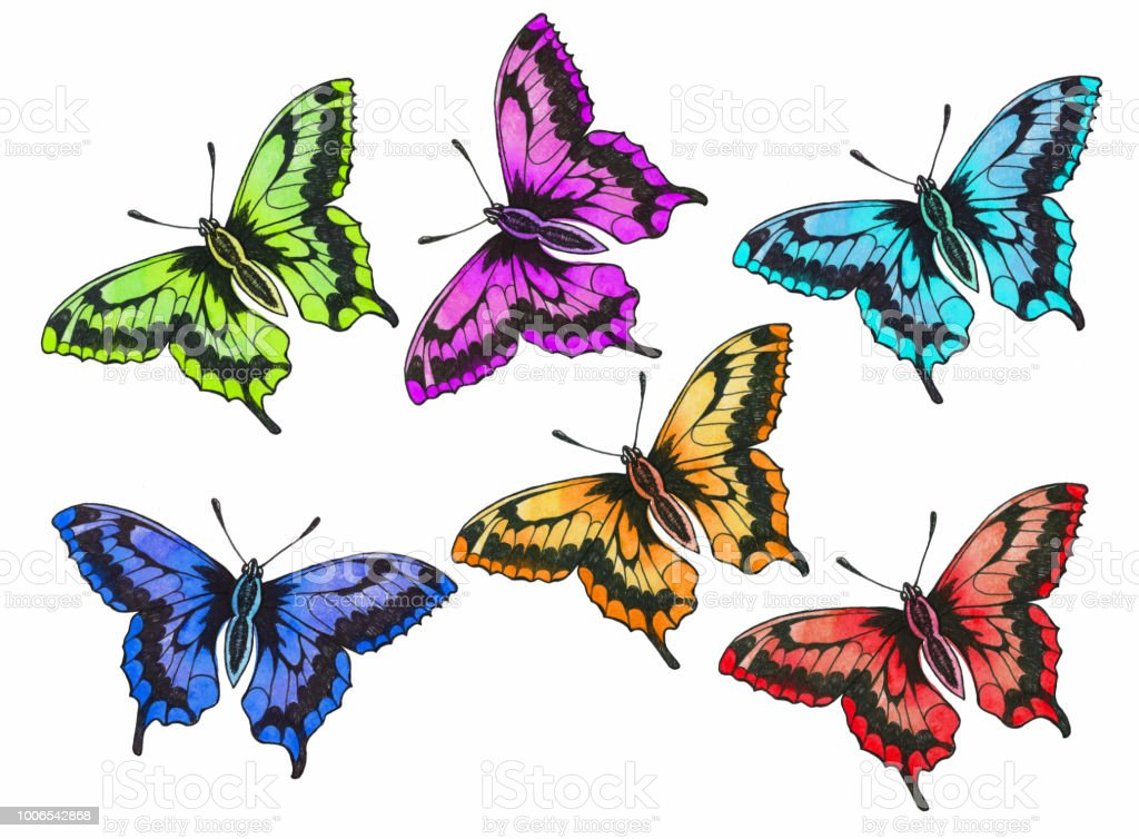Colorful Butterflies Stock Vector Art More Images Of Animal