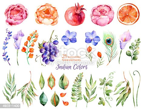 Colorful floral collection with roses, flowers, leaves, pomegranate, grape, callas, orange, peacock feather, with 31 Colorful floral watercolor elements.Set collection of floral elements for your compositions
