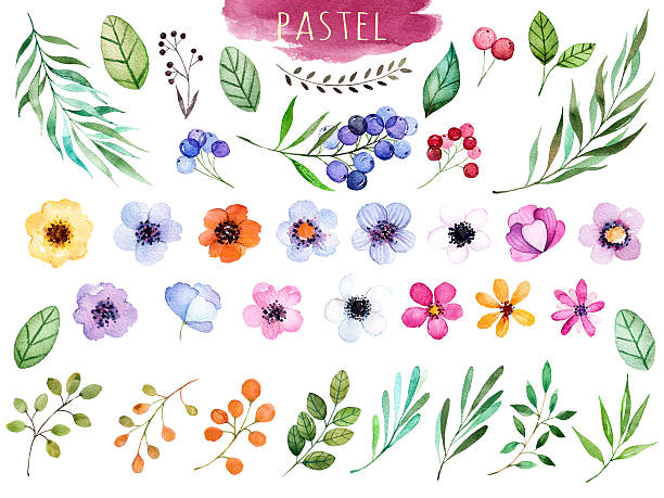 Colorful floral collection with multicolored flowers Colorful floral collection with multicolored flowers,leaves,branches,berries and more,Colorful floral collection with 37 watercolor elements.Set of floral elements.Pastel collection fruit clipart stock illustrations
