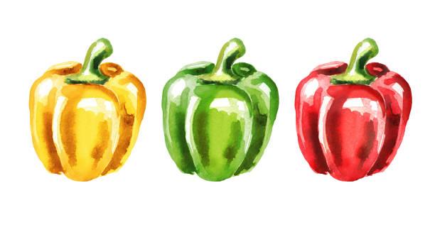 ilustrações de stock, clip art, desenhos animados e ícones de colors of bell pepper set. watercolor hand drawn illustration  isolated on white background - red bell pepper isolated