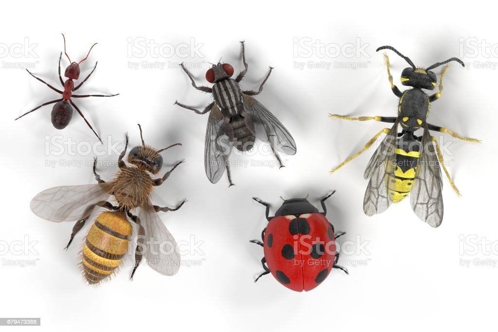common insect royalty-free common insect stock vector art & more images of ant