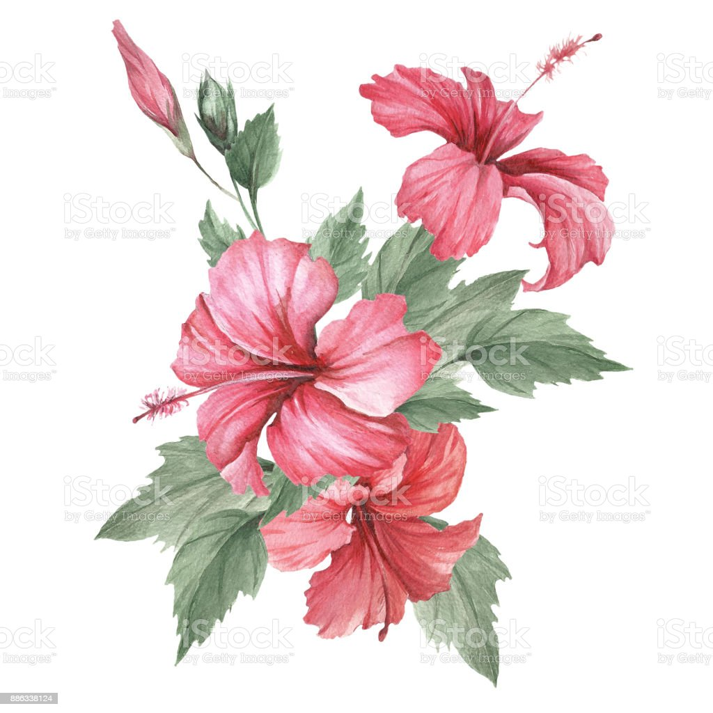 Composition With Hibiscus Hand Draw Watercolor Illustration Stock