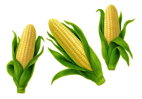 Corn Group