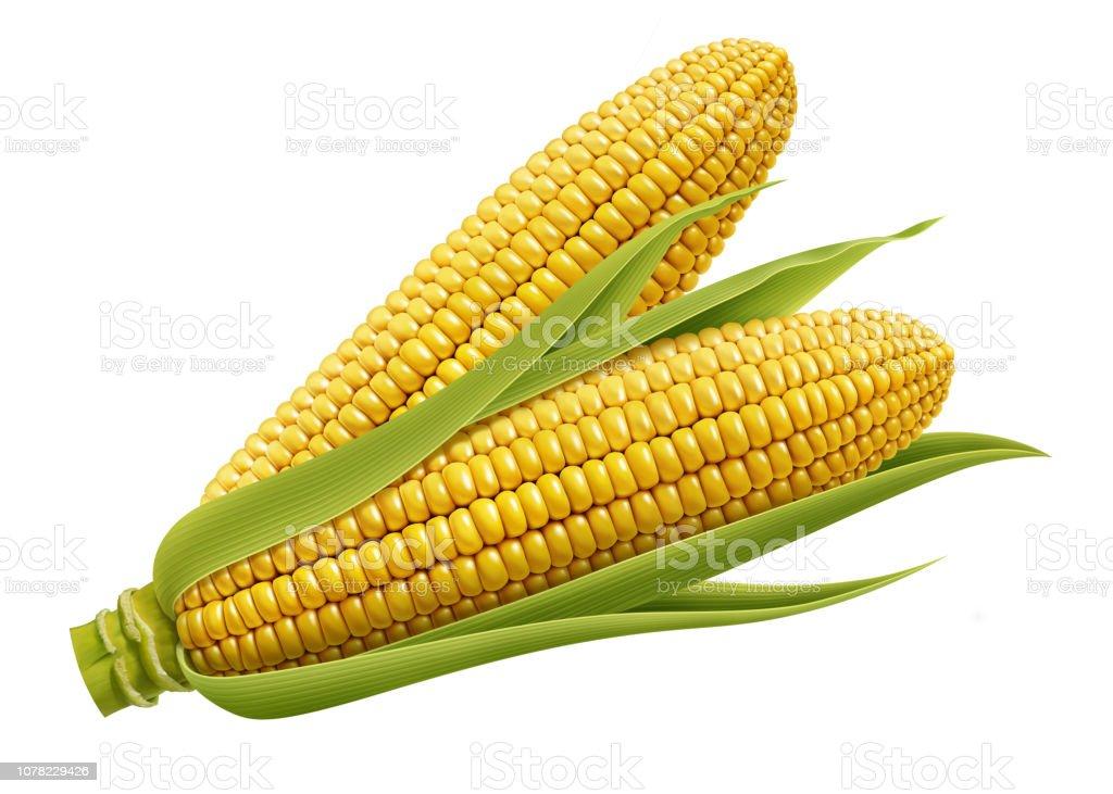 Fall Corn Digital Background