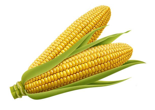 ilustrações de stock, clip art, desenhos animados e ícones de corn leaf isolated on white background - milho