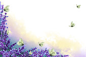 Corner frame of lavender twigs with flowers with multicolor fog and flock butterflies. Hand drawn watercolor illustration. Copy space.