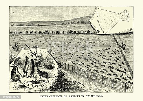 Vintage illustration of a Corral for extermination of rabbits, California, 19th Century
