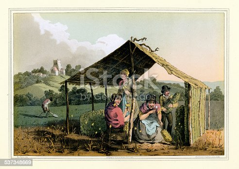 Vintage colour engraving of agricultural workers picking teasel or Dipsacus sativus. The crop was used in the textile industry, the heads of the plant was used for raising the nap of the cloth. The Costume of Yorkshire by George Walker. 1815