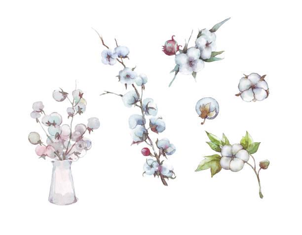 cotton bouquet flower and branch cotton bouquet flower and branch watercolor cotton stock illustrations