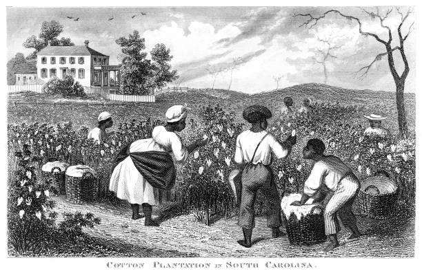 cotton plantation usa engraving 1873 - cotton stock illustrations, clip art, cartoons, & icons