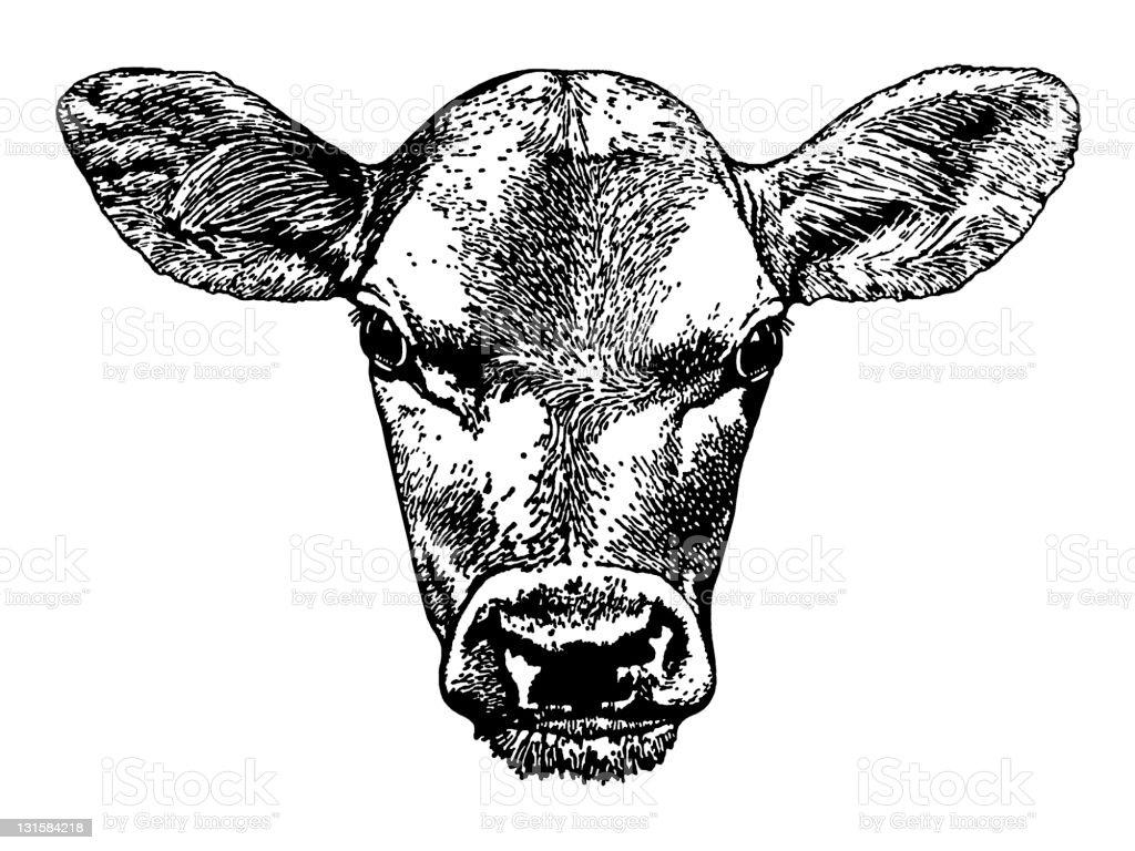 cow Head vector art illustration