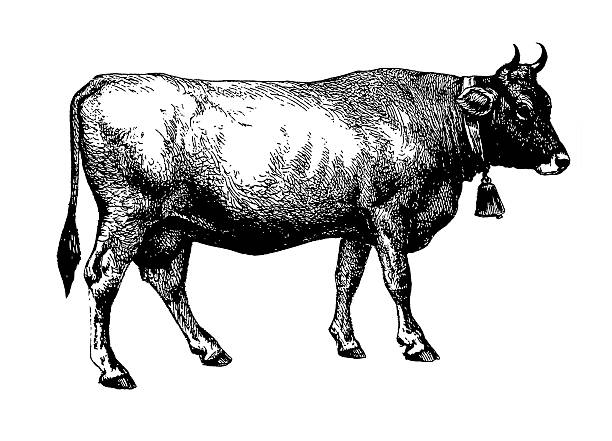 cow (isolated on white) - cow stock illustrations, clip art, cartoons, & icons