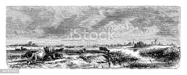 Cows in Holland - Scanned 1887 Engraving