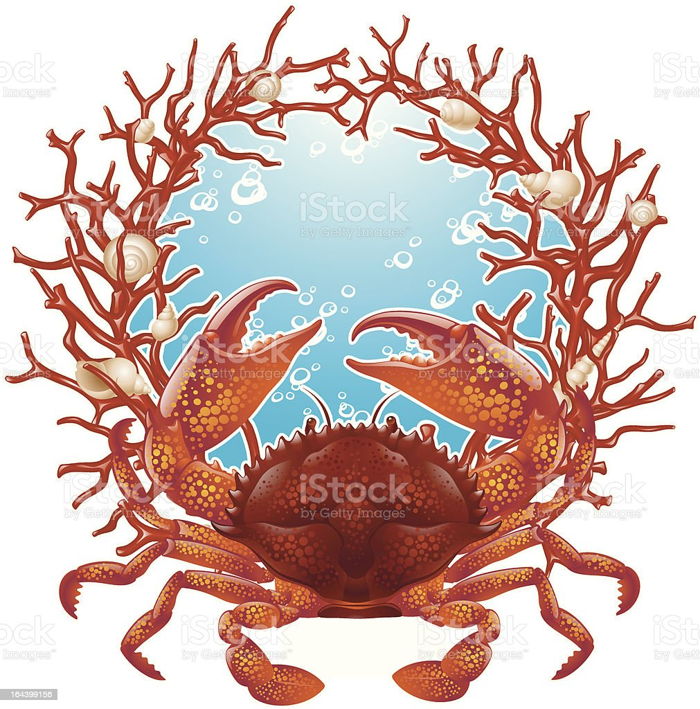 Crab and red coral frame royalty-free stock vector art