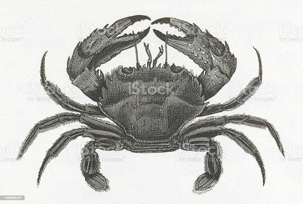 Crab Engraving Stock Vector Art & More Images of 19th Century ...