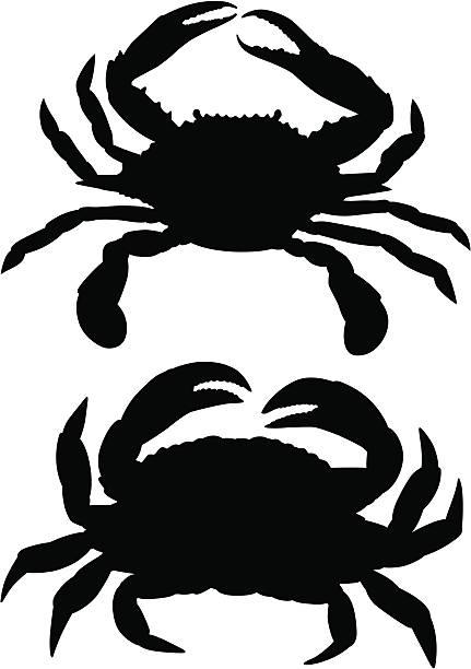stockillustraties, clipart, cartoons en iconen met crabs - blauwe zwemkrab
