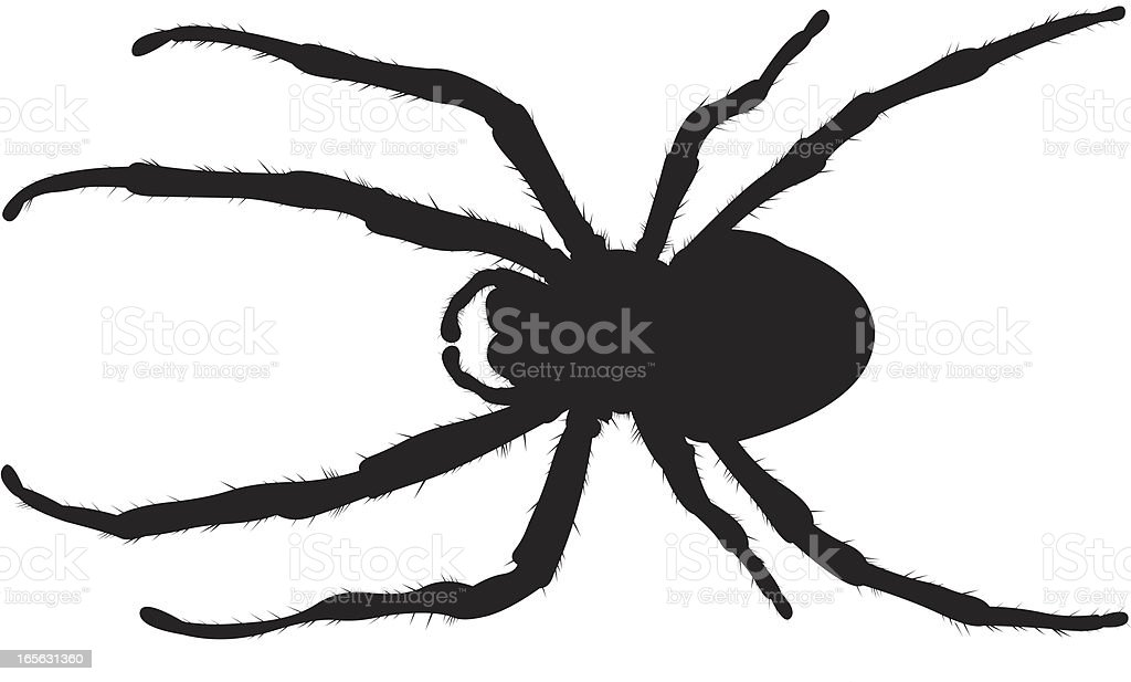 Creepy Spider royalty-free stock vector art