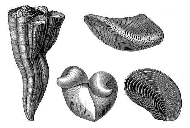 Cretaceous fossil vector art illustration