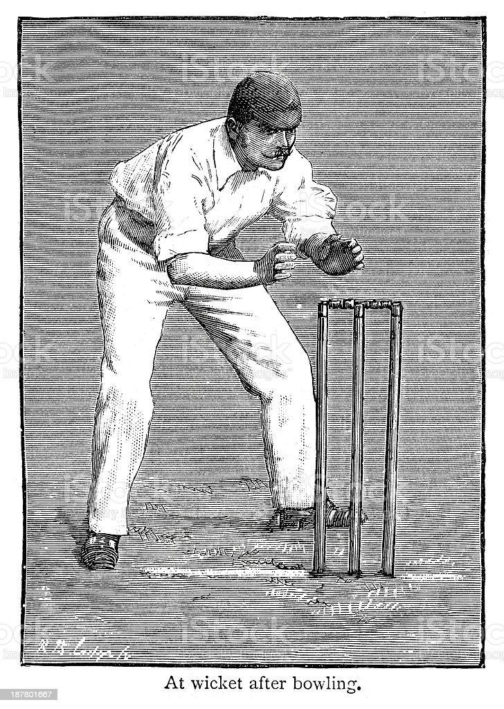 Cricket - Fielder royalty-free stock vector art
