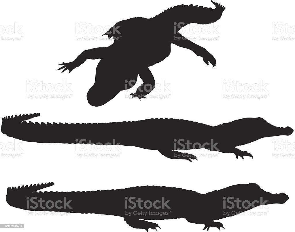 Royalty Free Crocodile Clip Art, Vector Images ...