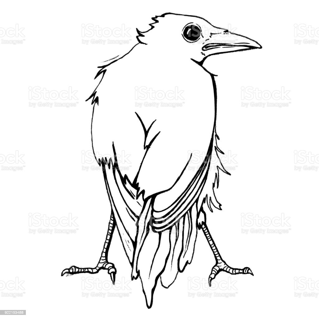 Crow Behind vector art illustration