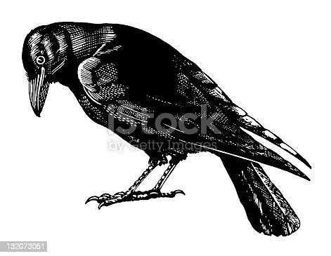 istock Crow 132073051