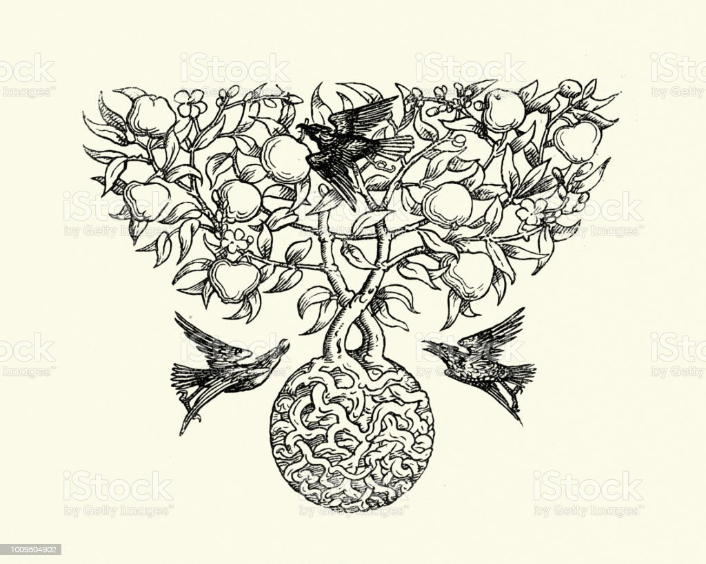 Crows on the apple tree, 19th Century vector art illustration