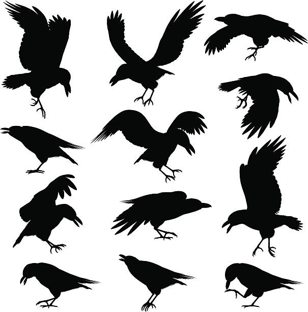 Royalty Free Crow Clip Art, Vector Images & Illustrations ...