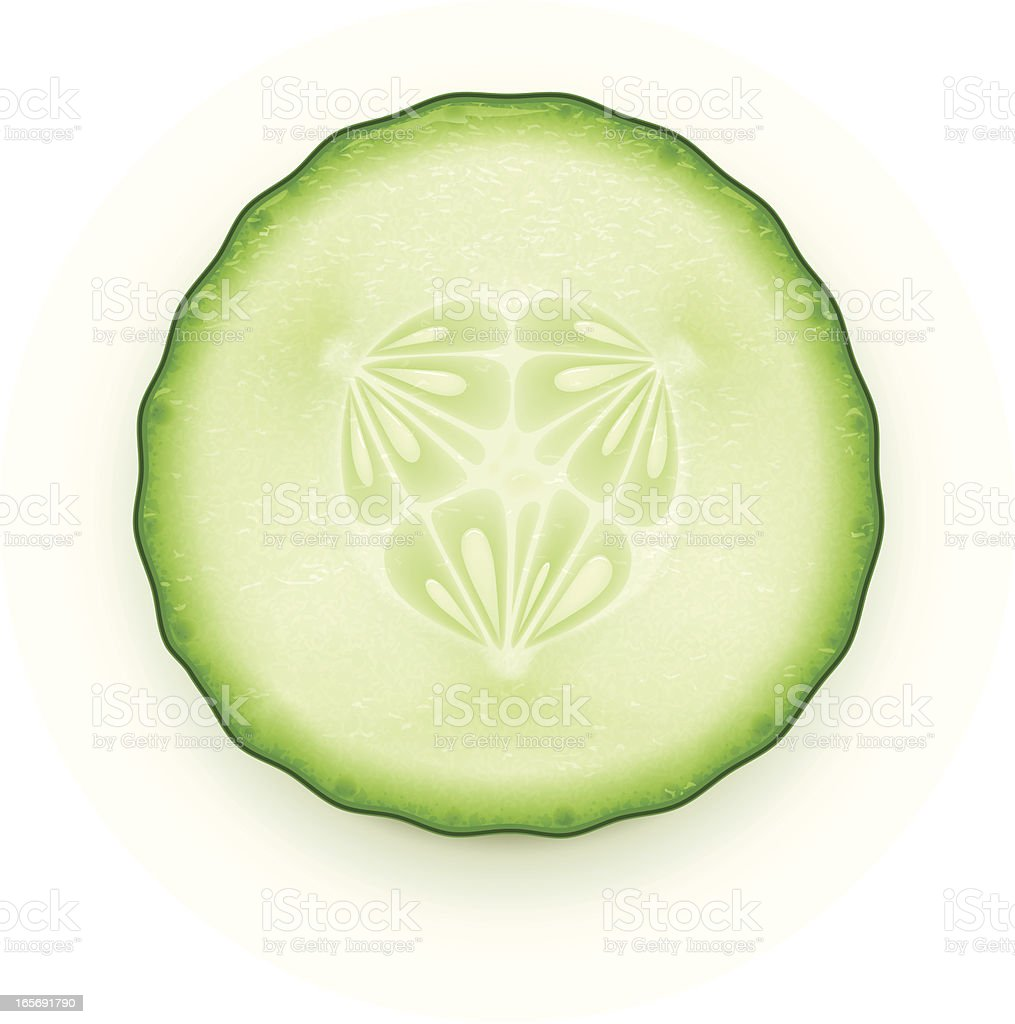 Cucumber slice vector art illustration