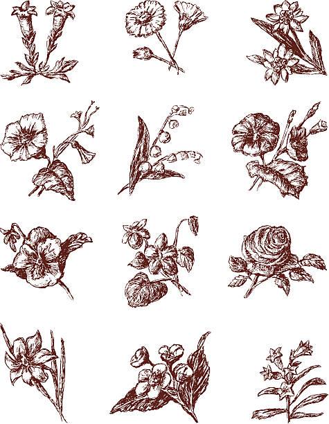 stockillustraties, clipart, cartoons en iconen met cultivated flowers - gentiaan