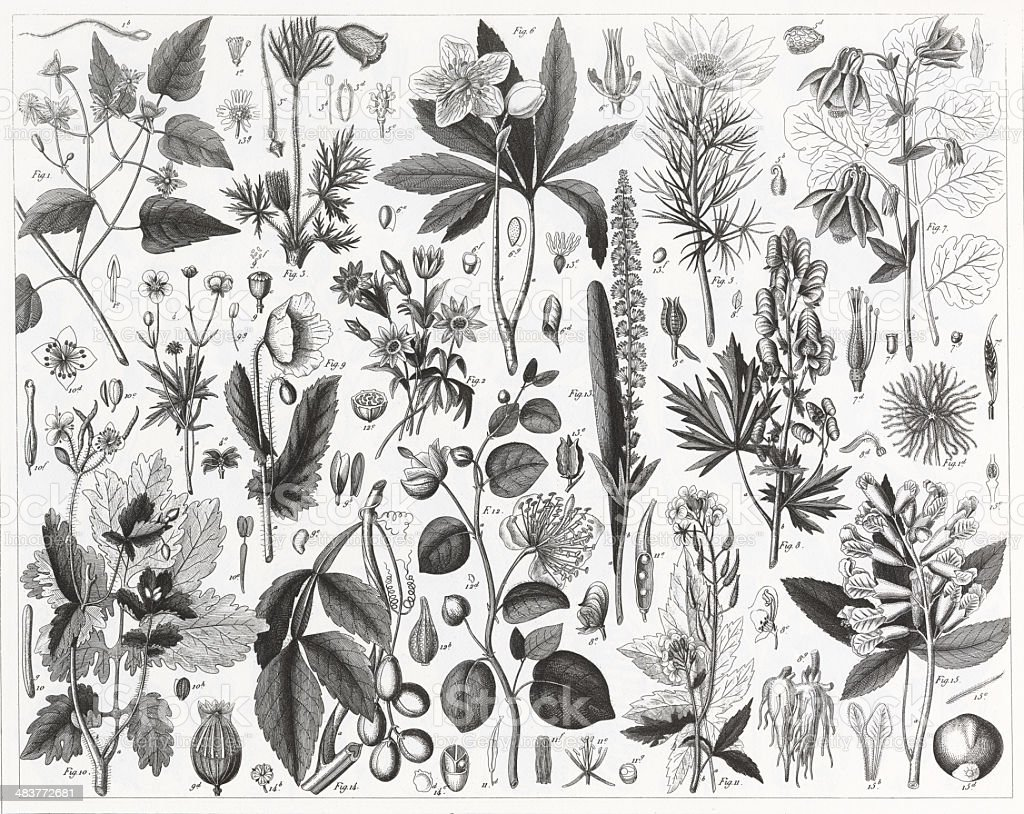 Cultivated Plants Engraving vector art illustration
