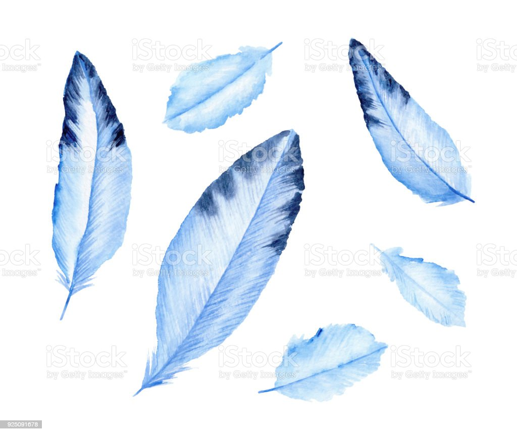 Cute blue feathers. Birds' feather. Watercolor illustration. vector art illustration