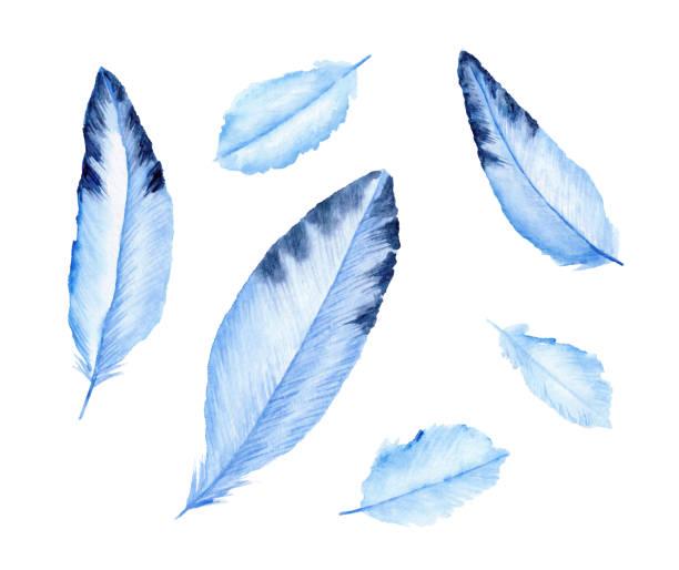 Cute blue feathers. Birds' feather. Watercolor illustration. vector art illustration